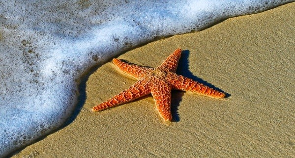 Blog – Measuring Impact in Terms of Starfish